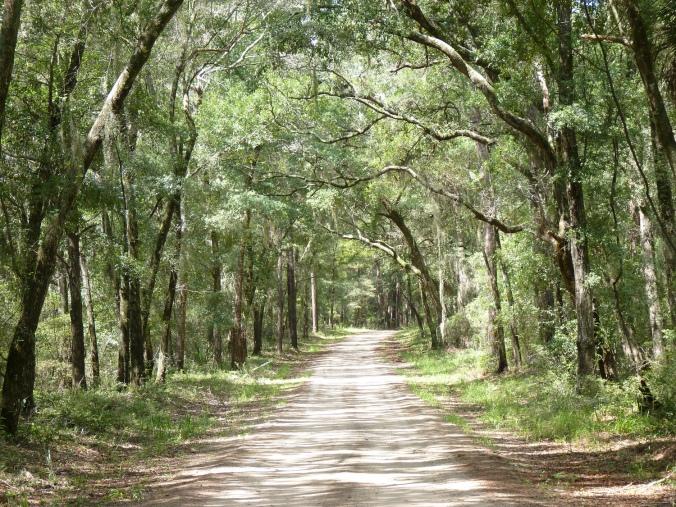daufuski road
